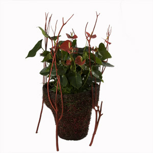 Anthurium cache pot naturel - MB Murielle Bailet ®