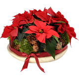 Poinsetia rouge - MB Murielle Bailet ®