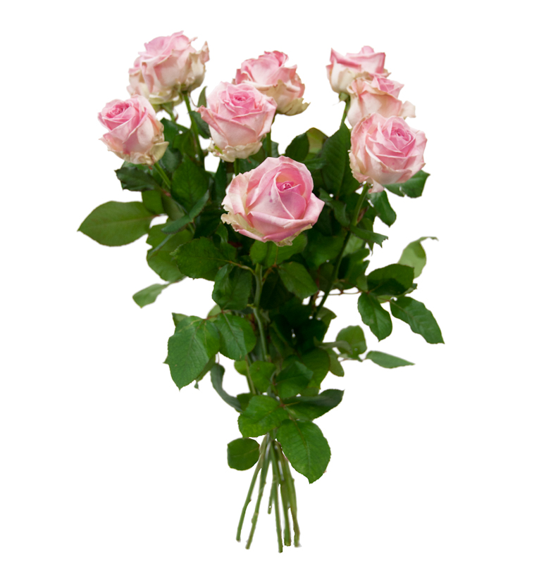 Couleur rose for Bouquet de rose