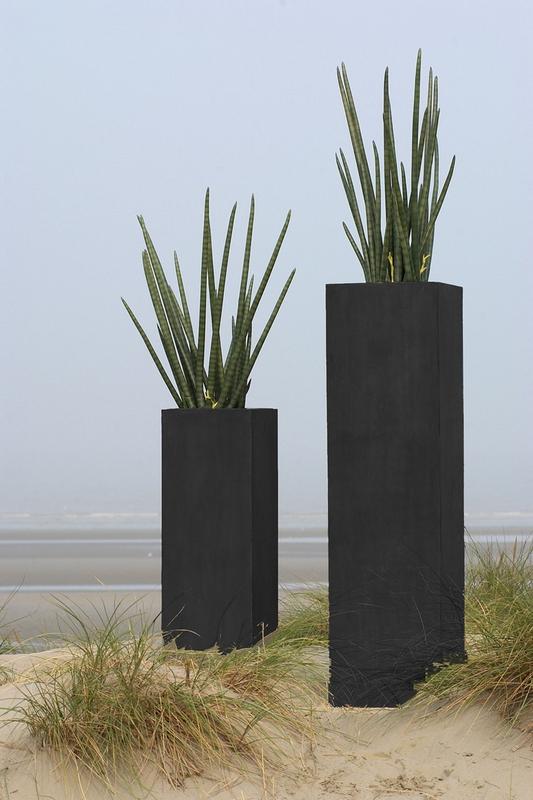 Collection rocabo for Belle plante exterieur