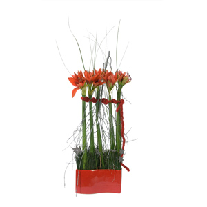 Arrangement d'Amaryllis rouges  - Bella Donna - MB Murielle Bailet ®