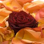 Rose Rouge Bouquet De Roses La Symbolique Le Message